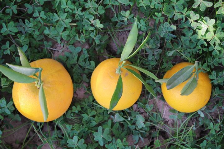 Preguntas frecuentes naranjas del turia naranjas del - Naranjas del arbol a la mesa ...
