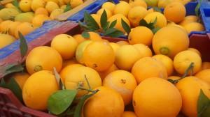 Naranjas del turia